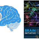 image of brain initiative